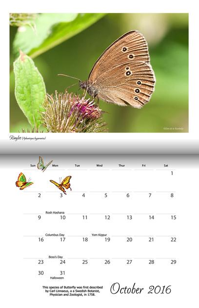 Butterflies & Dragonflies 2016 Calendar Cover